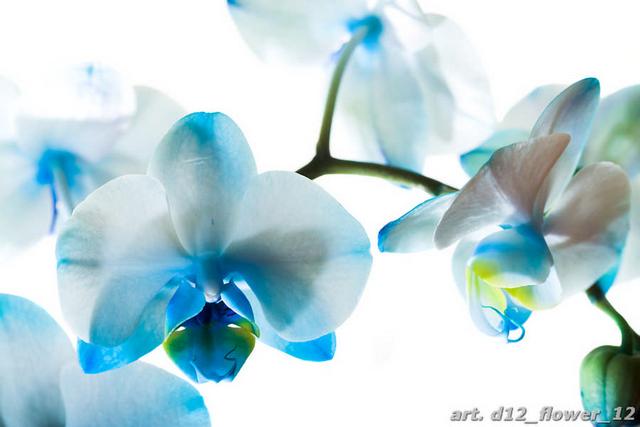 фотообои цветок: