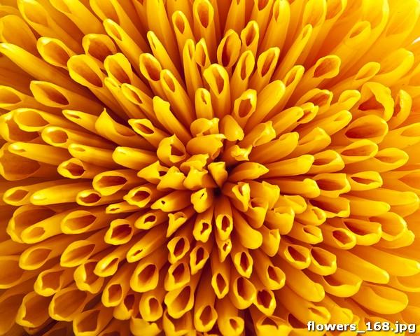 Фотообои желтый цветок печать