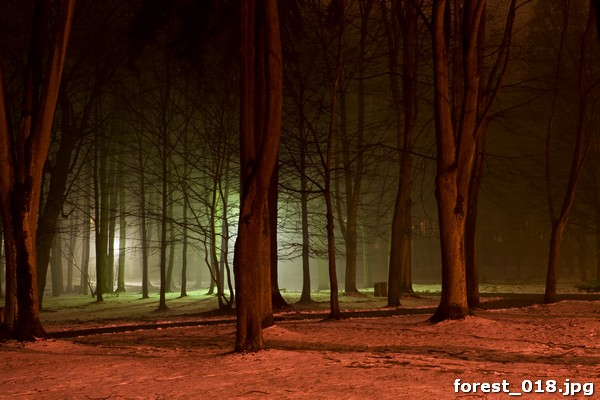forest_018