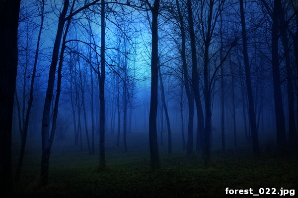forest_022