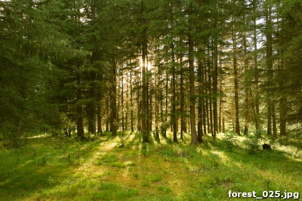forest_025
