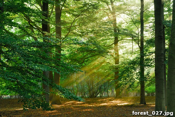 forest_027