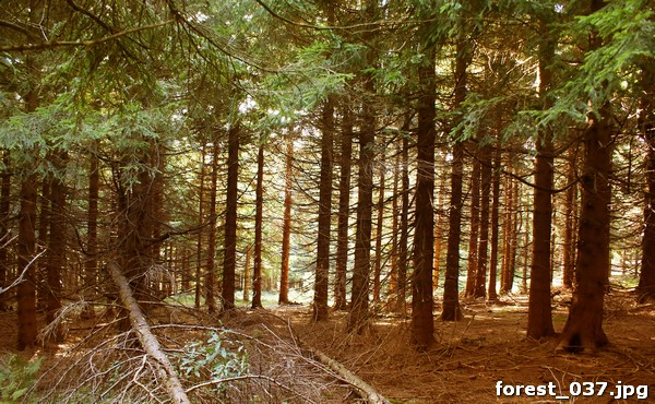 forest_037