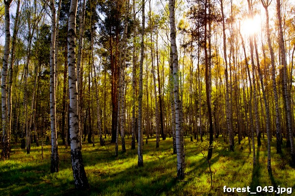 forest_043